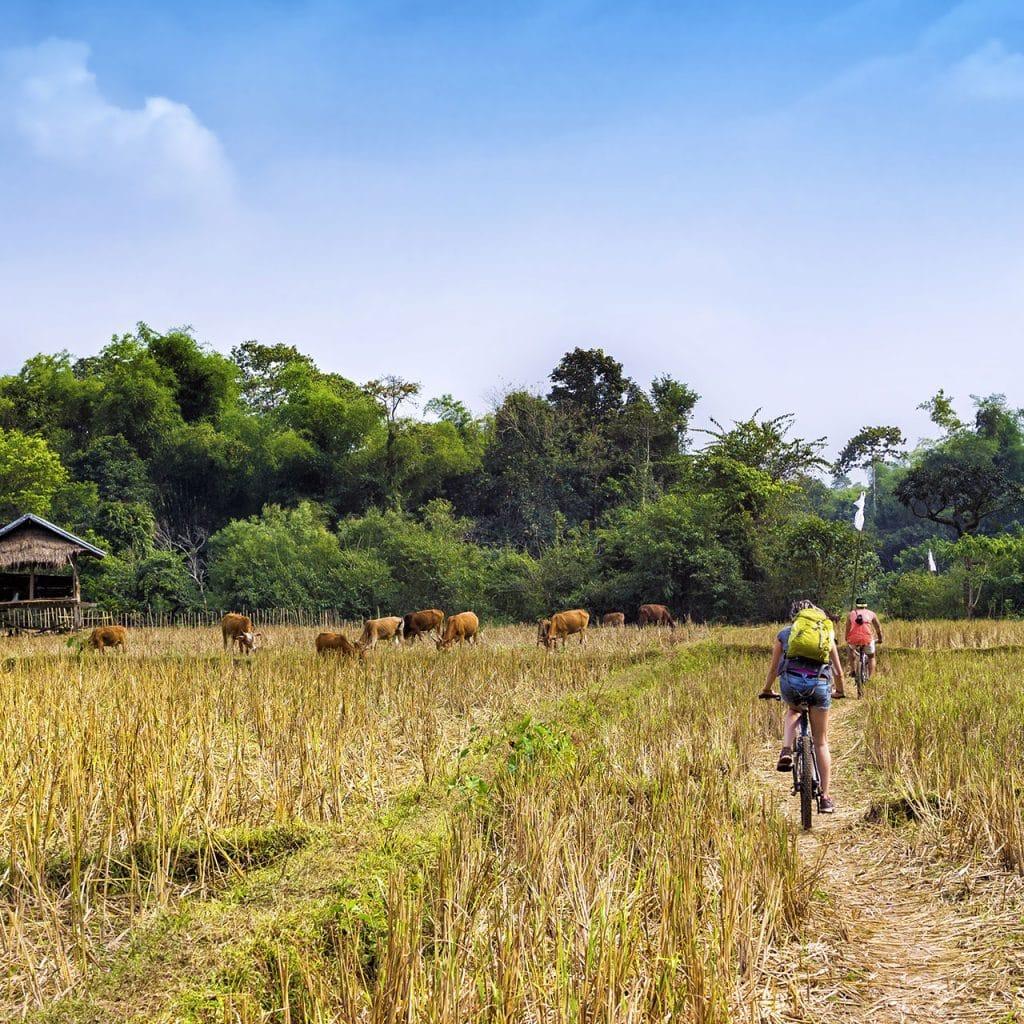 phnom pehn to battambang