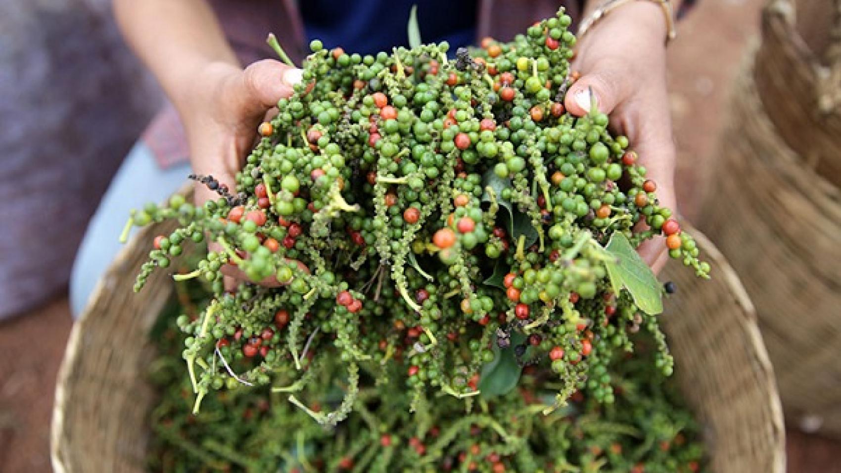 kampot pepper cambodia